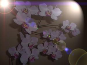 2016-kwiatek-10