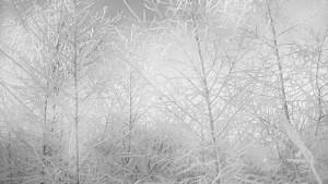 Tytuł ,,Zimowy las'' Szerokość 550 px Wysokość 309 Rozmiar 191KB